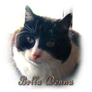 The Digglers' Cat ~ Bella Donna
