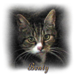 The Digglers' Cats ~ Bonty