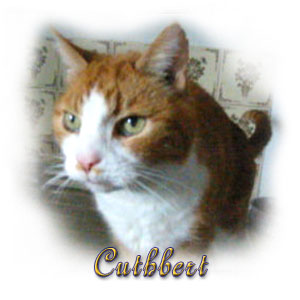 The Digglers' Cat ~ Cuthbert