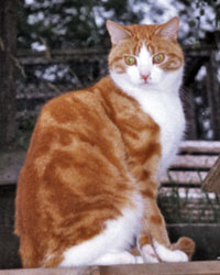The Digglers' Cats ~ Cuthbert