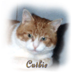 The Digglers' Cat ~ Cuthie