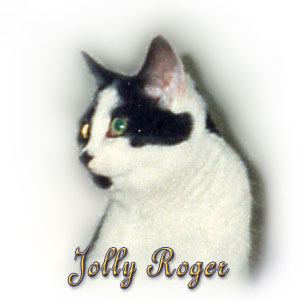 The Digglers' Cat ~ Jolly Roger
