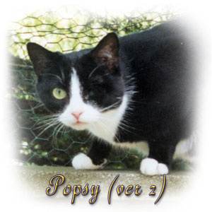 The Digglers' Cat ~ Popsy (2)