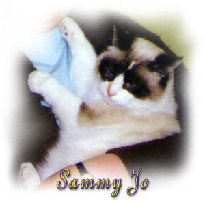 The Digglers' Cats ~ Sammy Jo