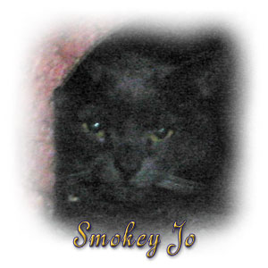 The Digglers' Cats ~ Smokey Jo
