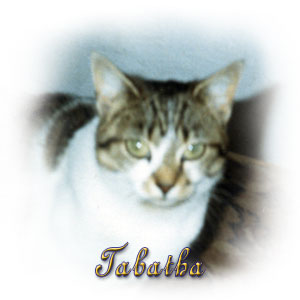 The Digglers' Cats ~ Tabatha