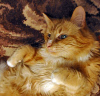 The Digglers' Cats ~ Tibby Tabby