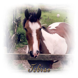 The Digglers' Horse ~ Tobias
