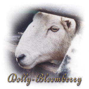 The Digglers' Sheep ~ Dolly-Bloomberry