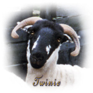 The Digglers' Sheep ~ Twinie